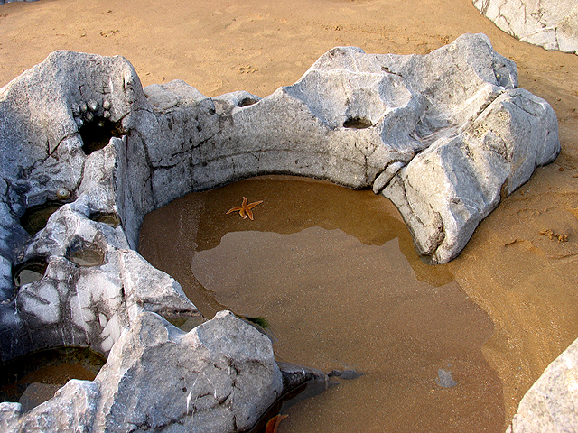 Rock Pool, Caswell Bay - geograph.org.uk - 409421