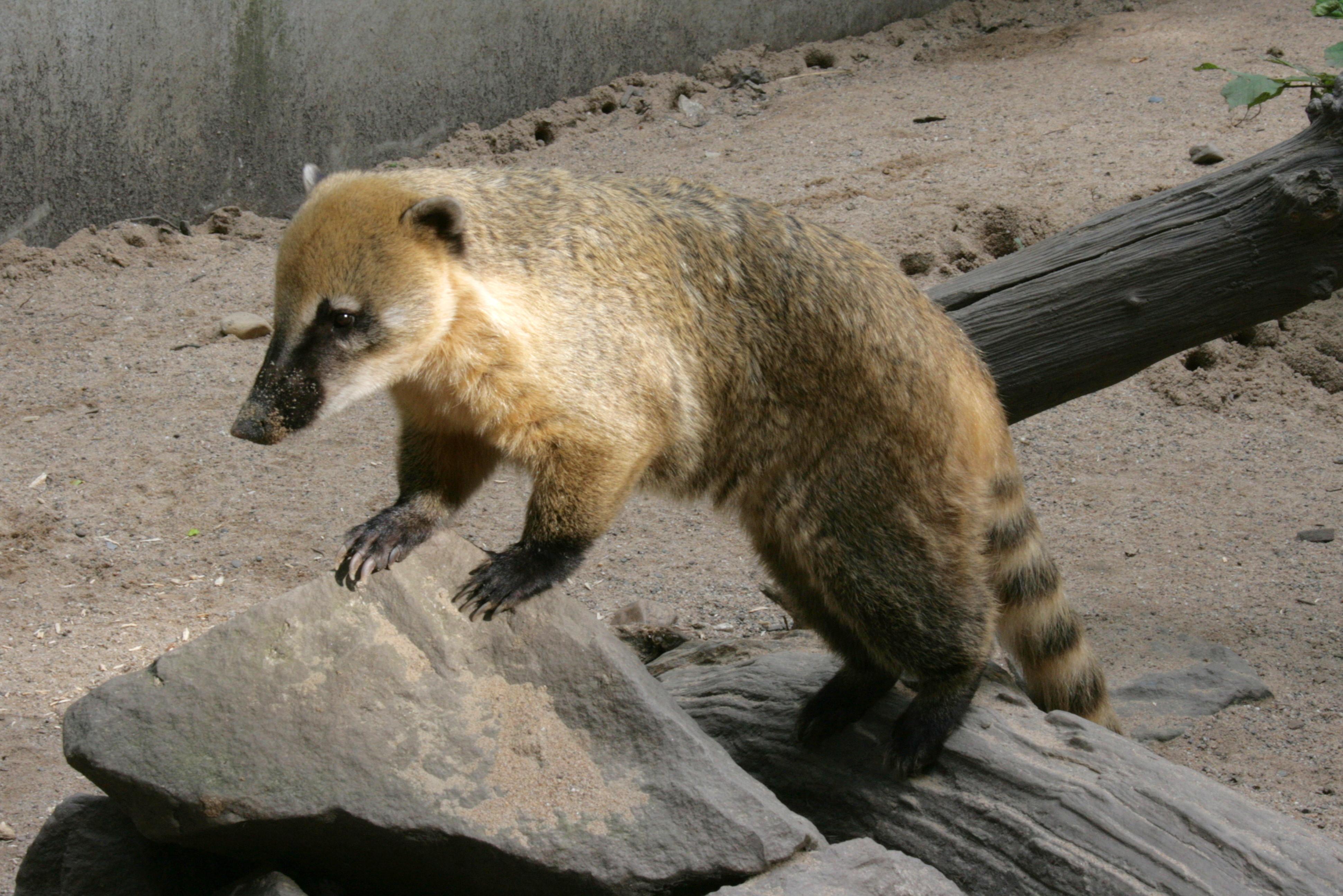 Animal Licensing  Maryland St Redwood City Ca