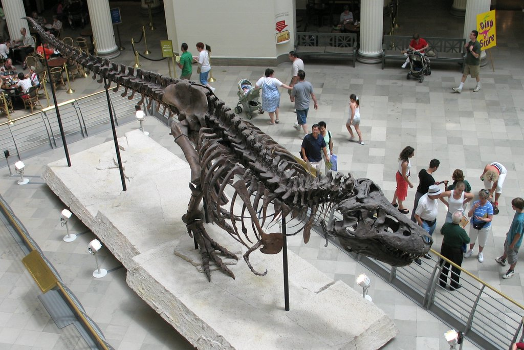 Sue at Field Museum.jpg