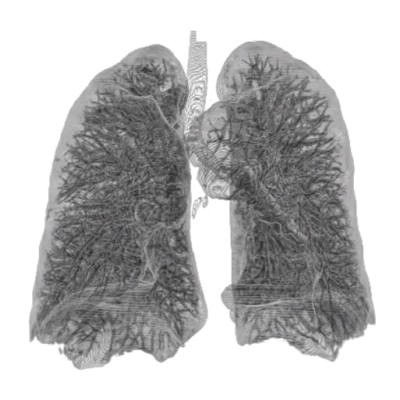 Thorax Lung 3d (2).jpg