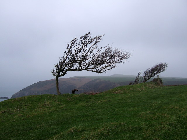 File:Wind-sculpted trees on the Pembrokeshire coast - geograph.org.uk - 298264.jpg