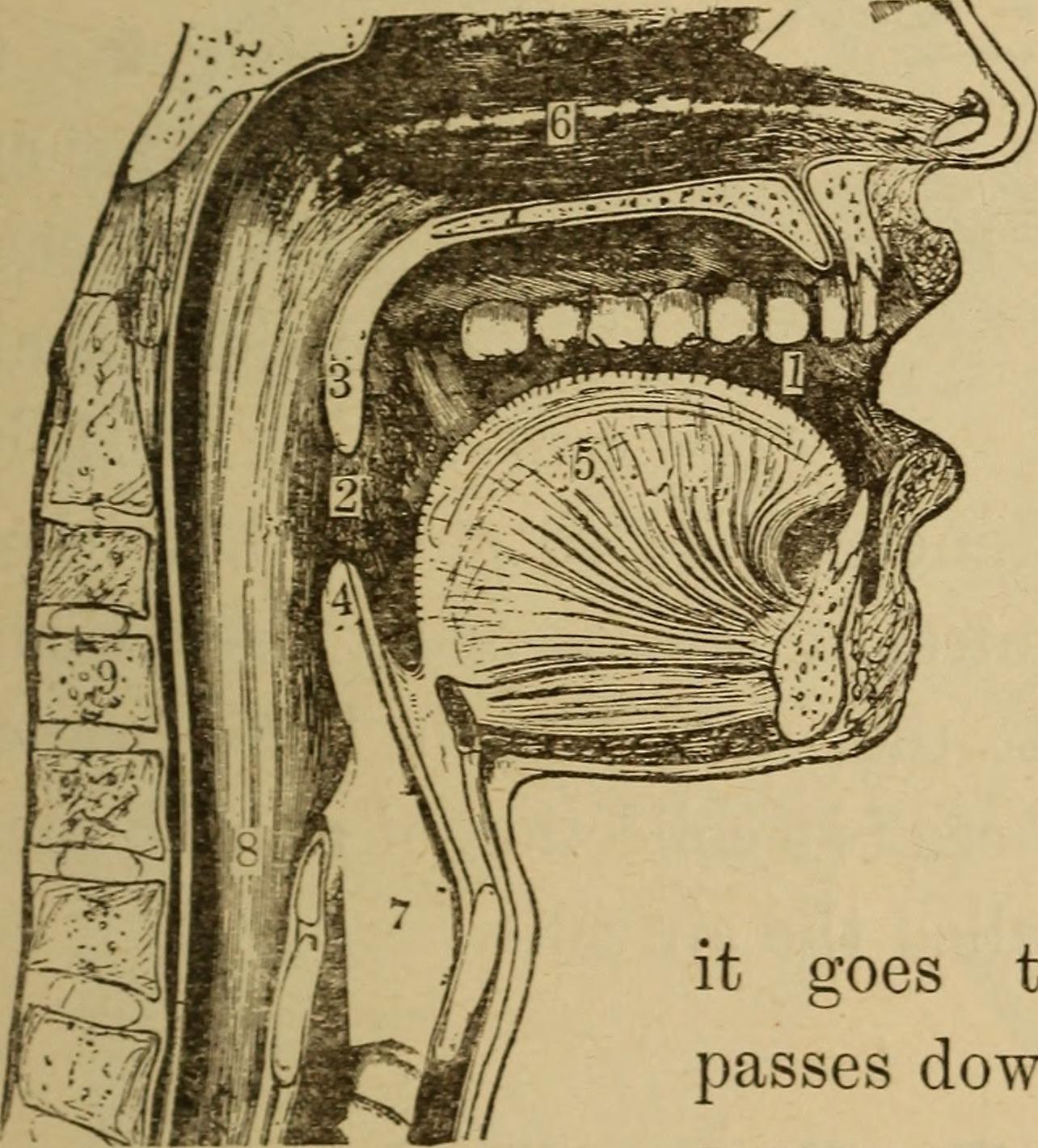 Ziemlich Anatomy And Physiology College Textbook Fotos - Anatomie ...