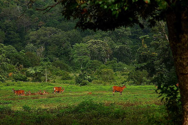 Alas Purwo National Park - Wikipedia
