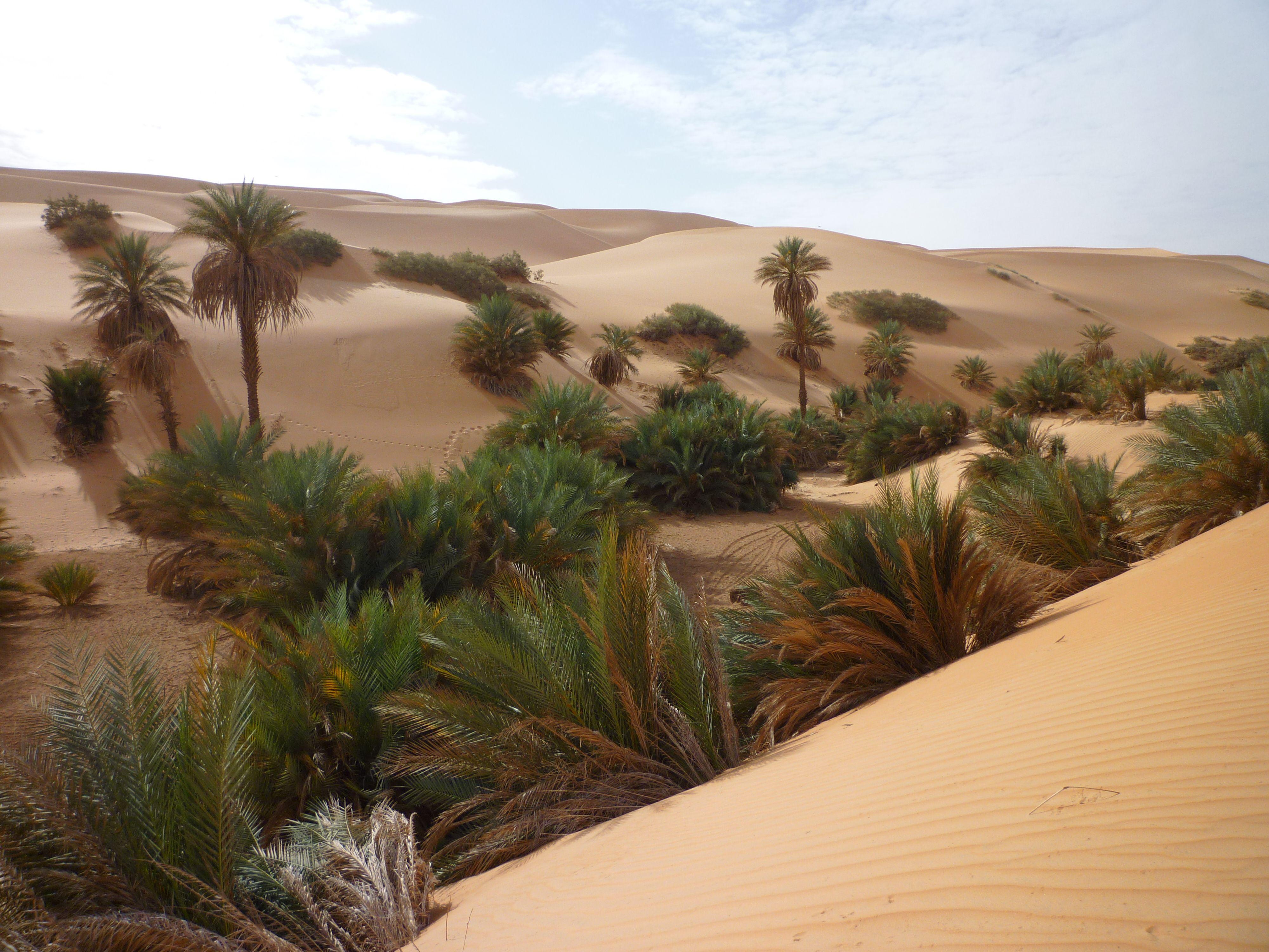 artesischer brunnen sahara