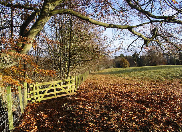 File:An Autumn Field - geograph.org.uk - 615320.jpg