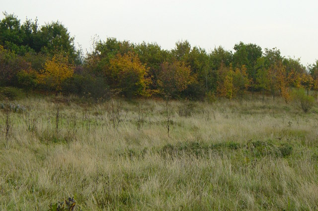Autumn colours in the Rising Sun Country Park - geograph.org.uk - 584788