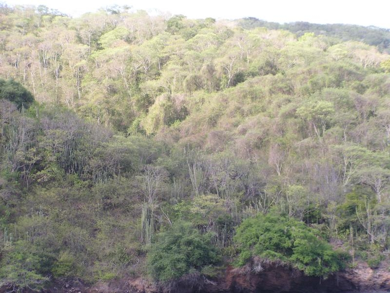 Tropical and subtropical dry broadleaf forests