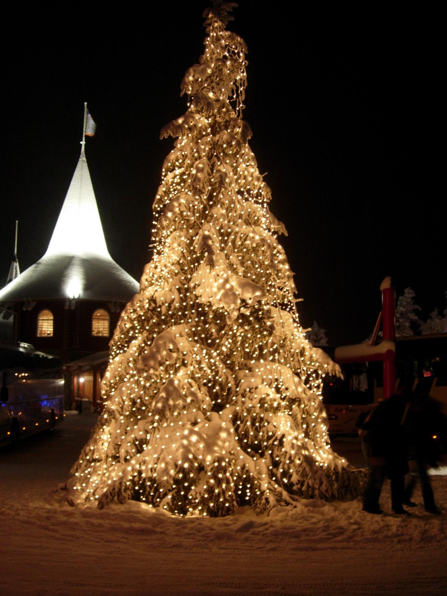 Christmas Tree At Santa Claus'
