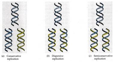 File:DNA.three-models.1.jpg