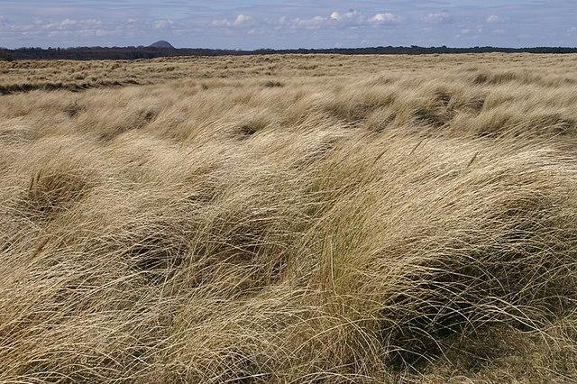 Dunes, John Muir Country Park - geograph.org.uk - 1231089