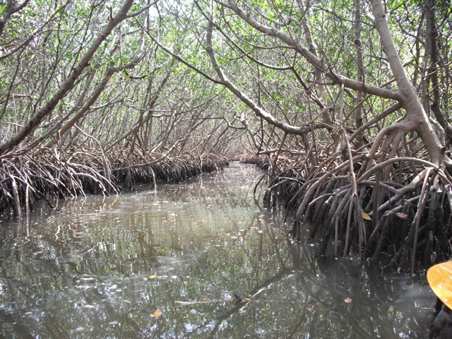 mangrove vegetation of southeren east coast The loss of mangrove species will have devastating economic and  arabian  peninsula, and the northern and southern atlantic coasts of africa, as well as on  islands in the south pacific [72] and the eastern tropical pacific.