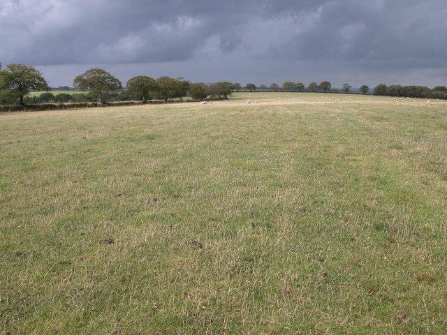 Field beside the B3042 - geograph.org.uk - 249701