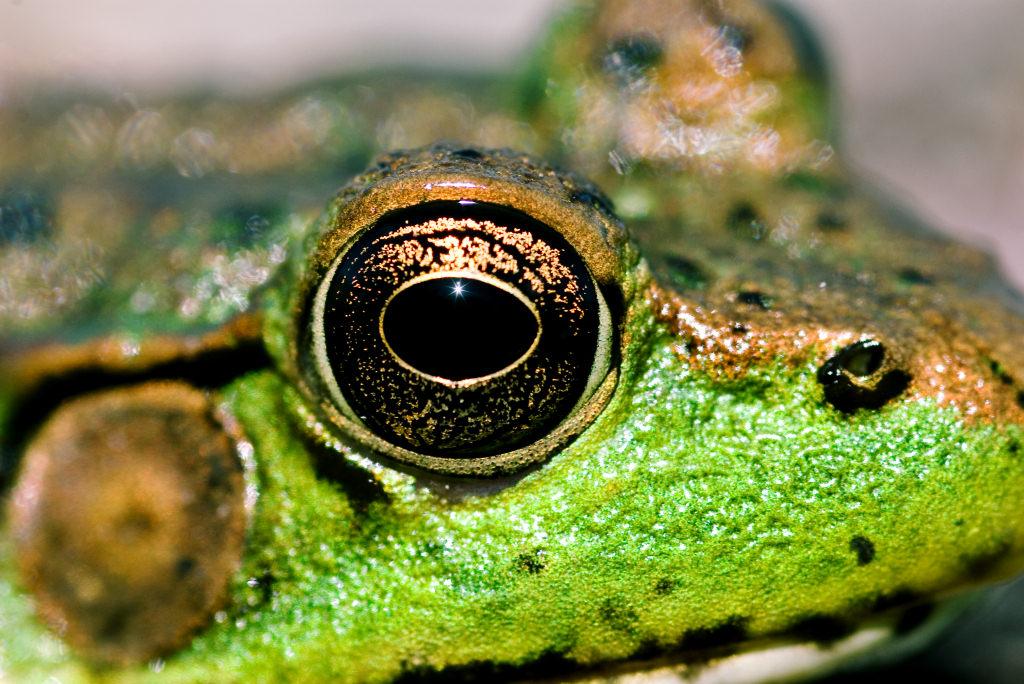 Image Result For Images For Amphibian