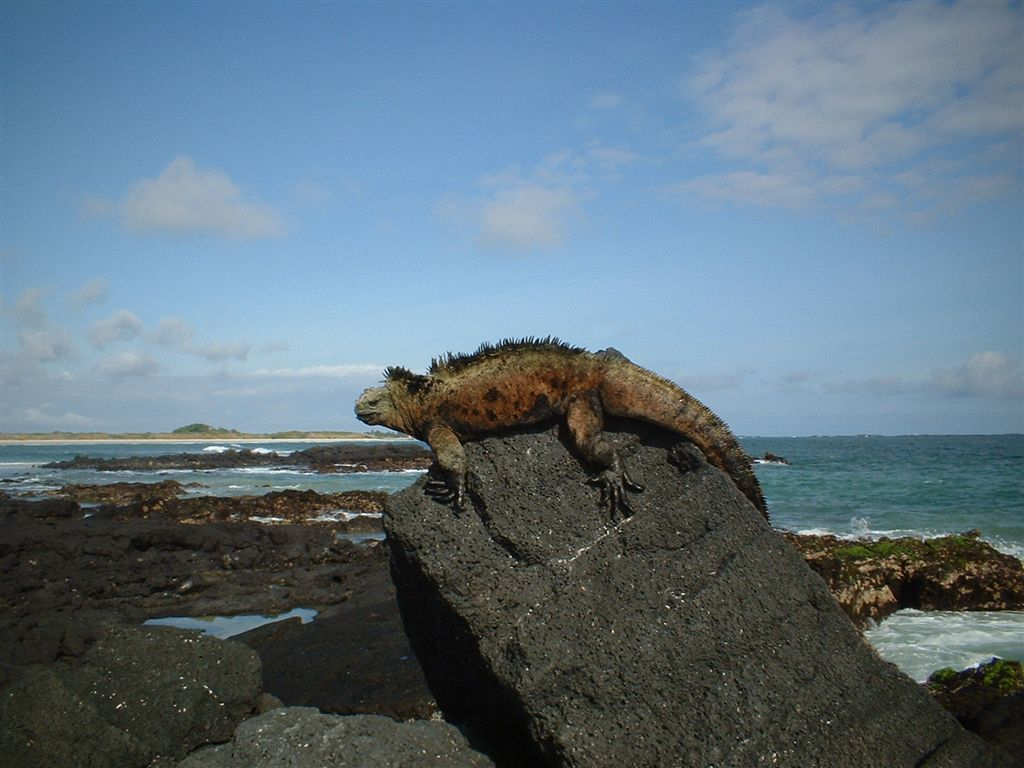 Image result for galapagos national park""