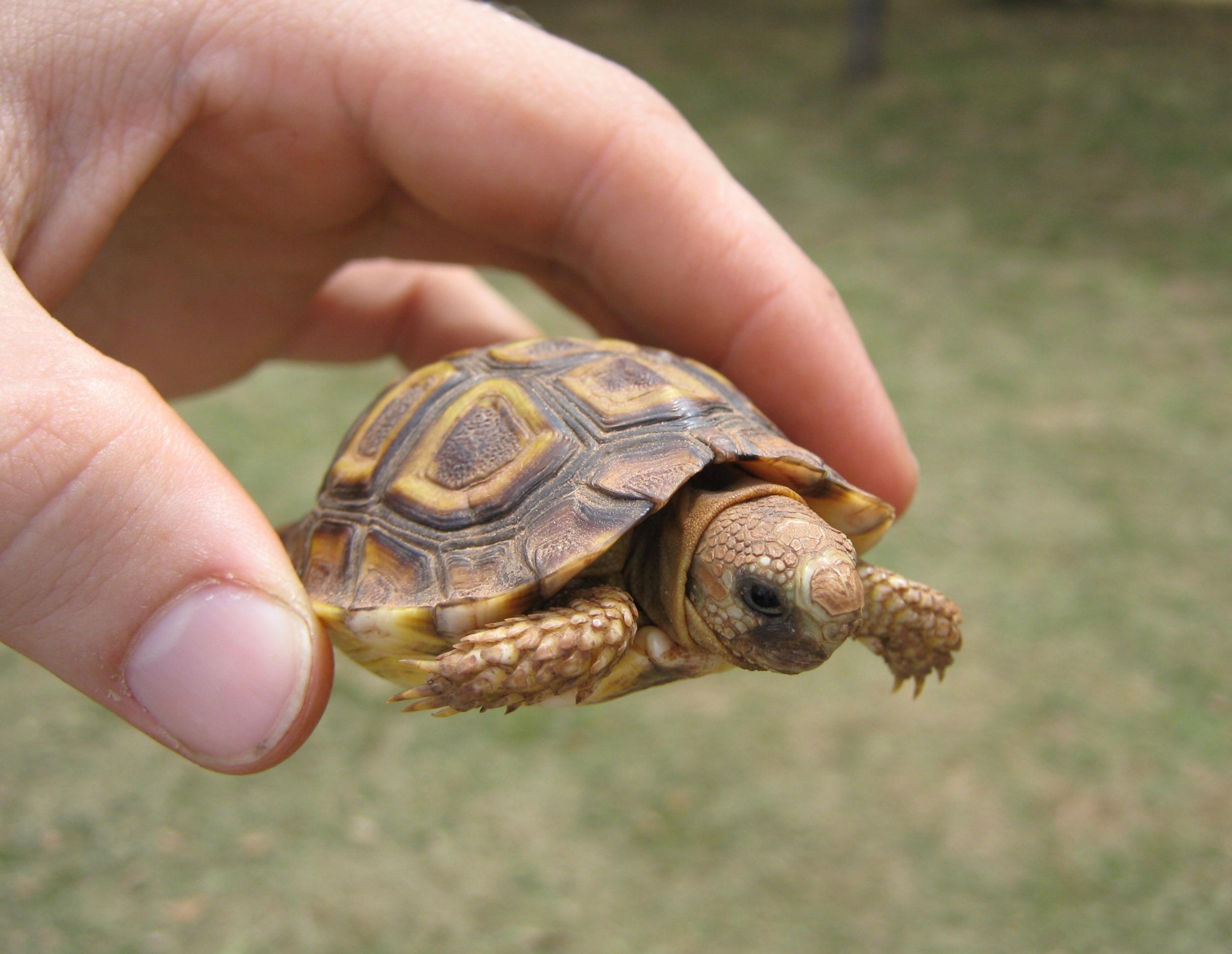 Can A Turtle Endure A Car Ride