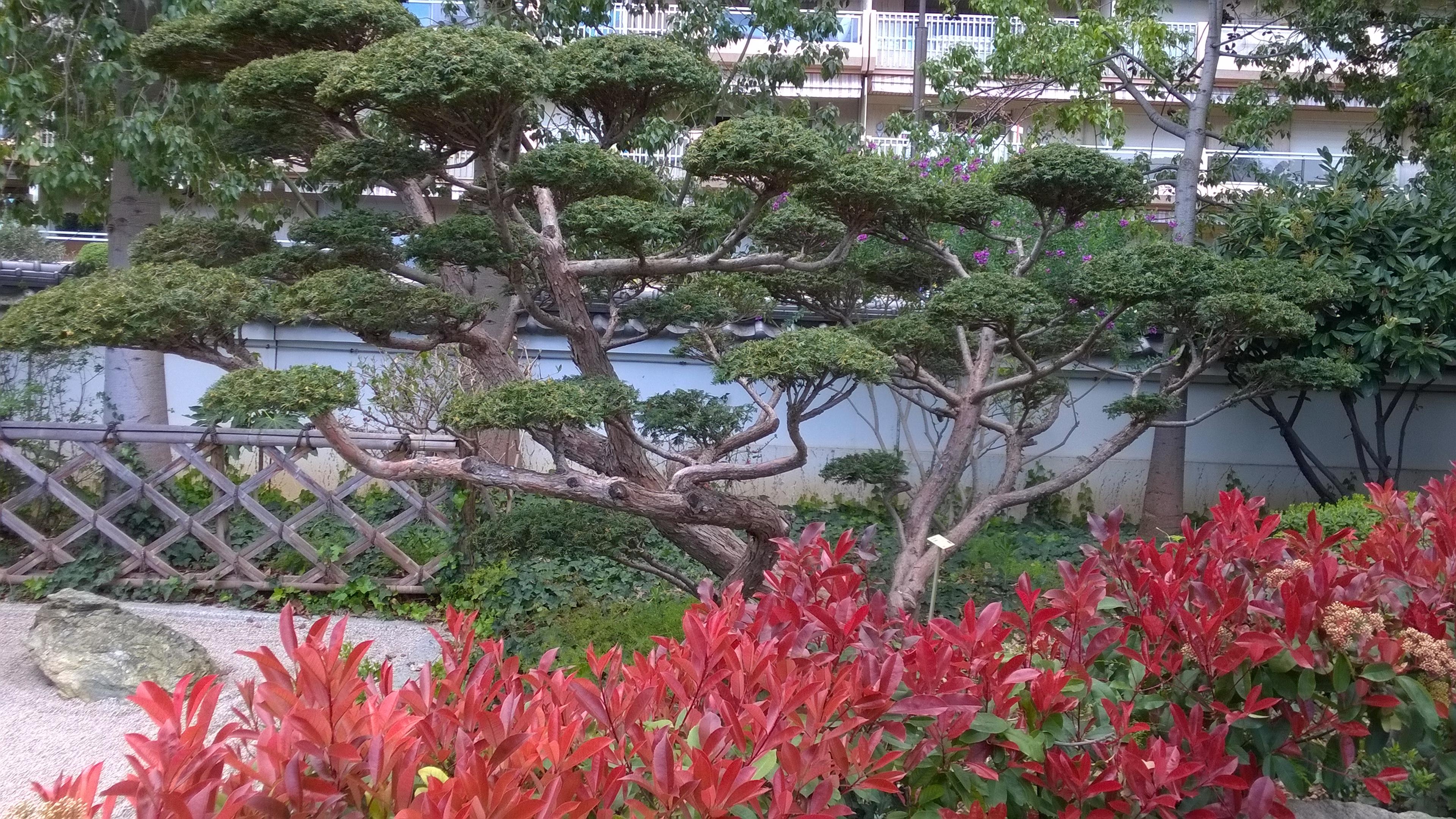 File japanese garden monaco topiary near the zen garden for Jardin japonais 78