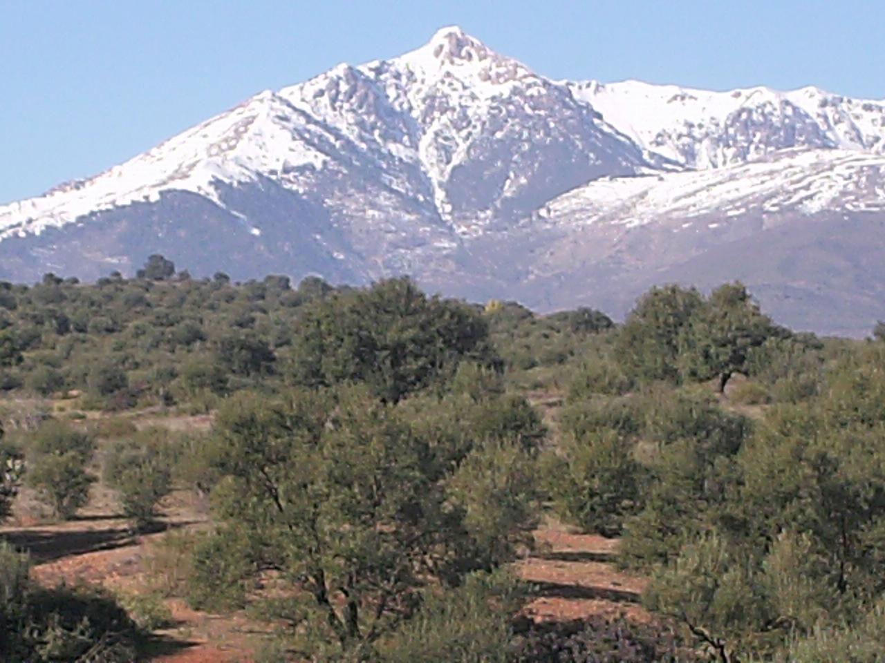 File:LALA KHEDIDJA.JPG - Wikimedia Commons