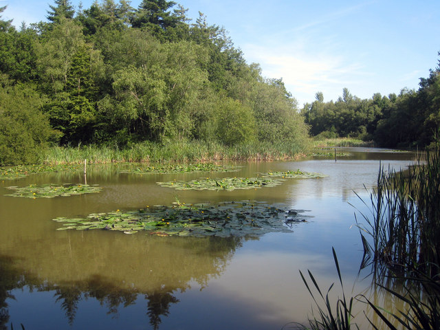 Lake between Abbots Wood and Wilmington Wood - geograph.org.uk - 1425194