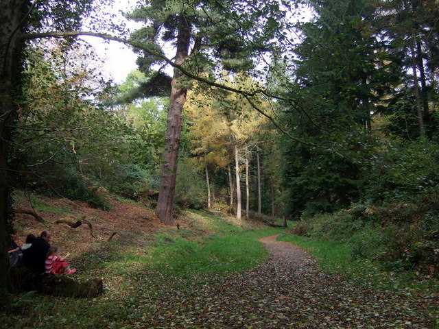 Leigh Woods in autumn - geograph.org.uk - 1592273