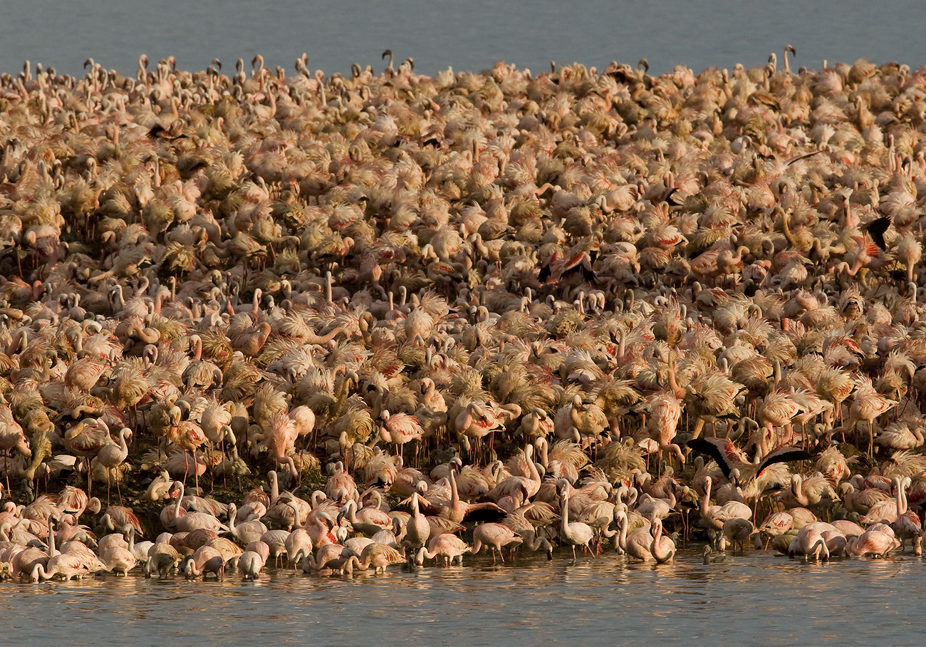 Flamingos roosting at Kemfers Dam
