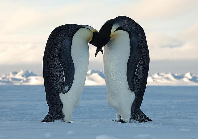 Nature Antarctica
