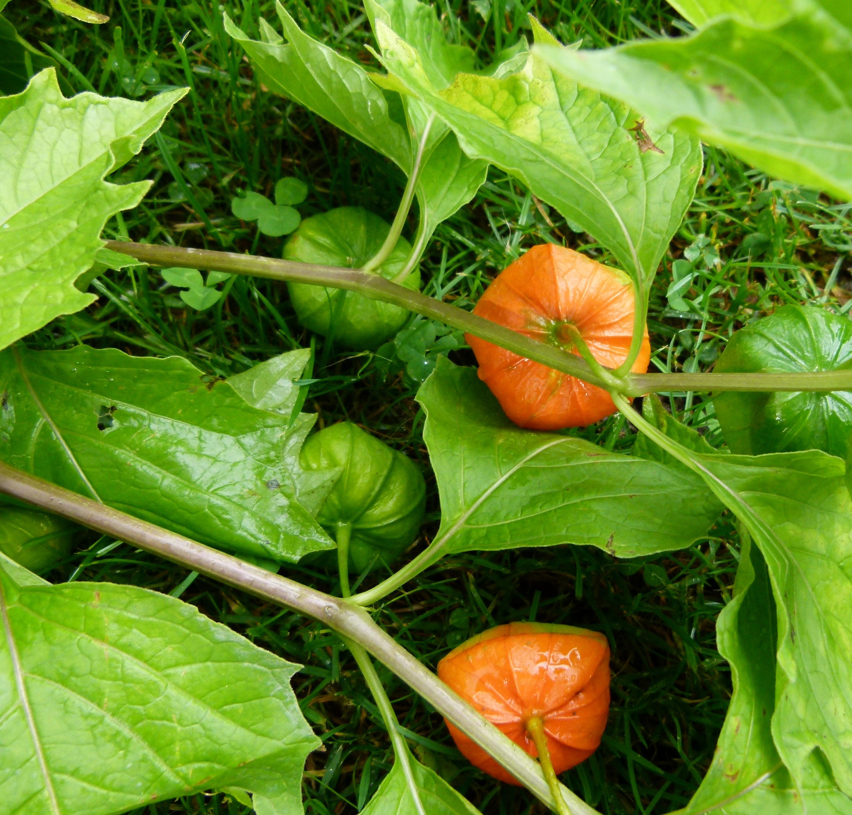Как выращивать рассаду - когда и как сажать, посев и 74
