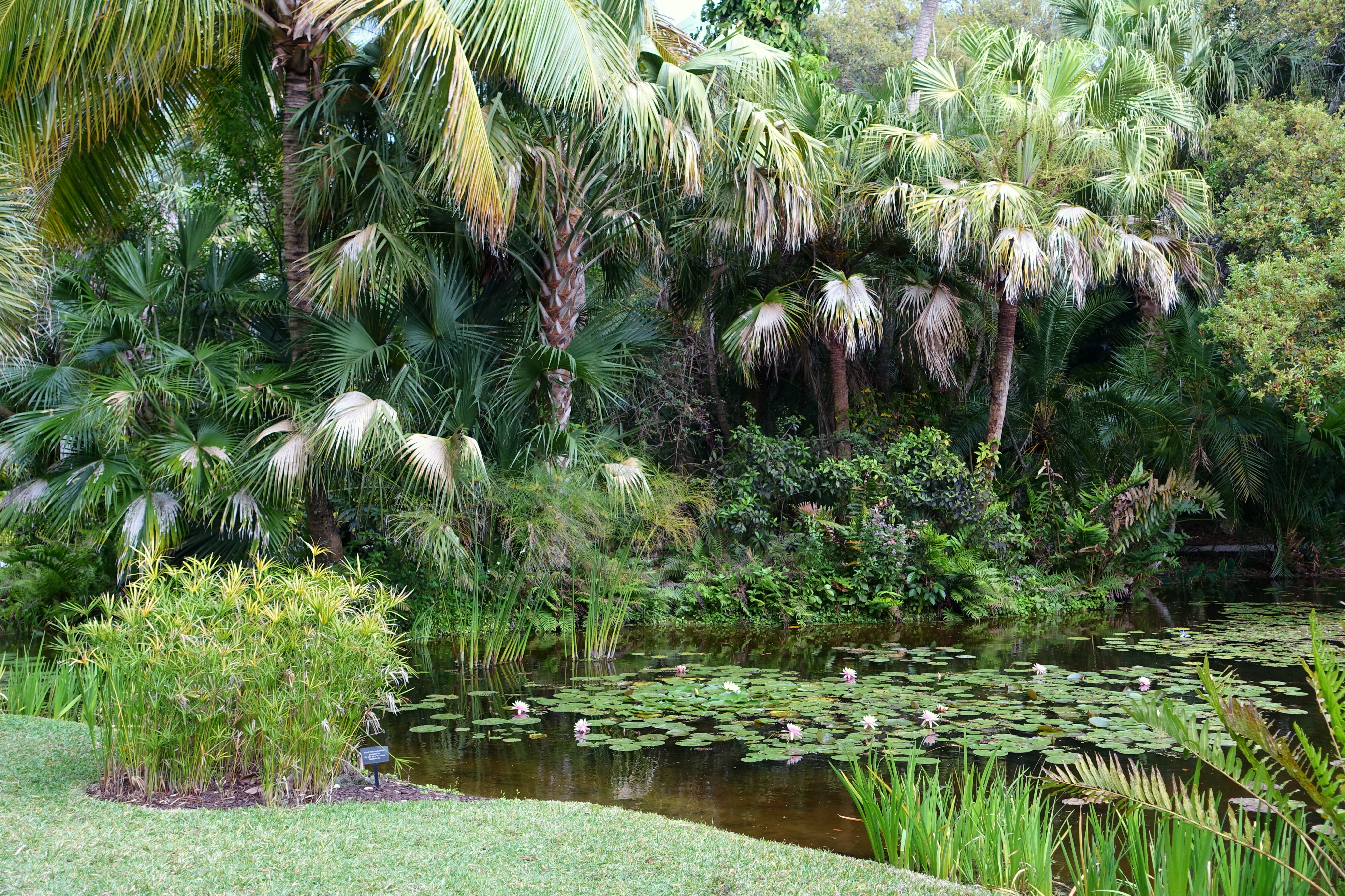File:Pond - McKee Botanical Garden - Vero Beach, Florida - DSC02985 ...