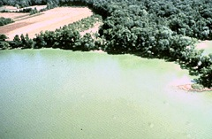 The bright green water in the Potomac River estuary is the result of a dense bloom of cyanobacteria.