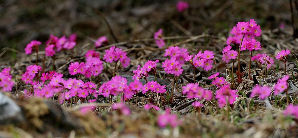 Giardino Botanico Alpino Di Pietra Corva Wikidata
