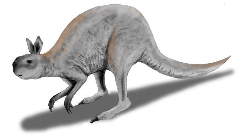 Výsledek obrázku pro procoptodon