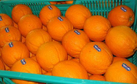 Ribera arance wn