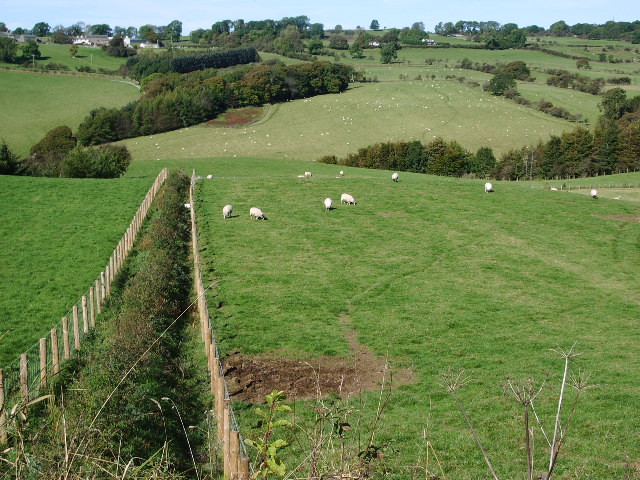 Sheep - geograph.org.uk - 577814