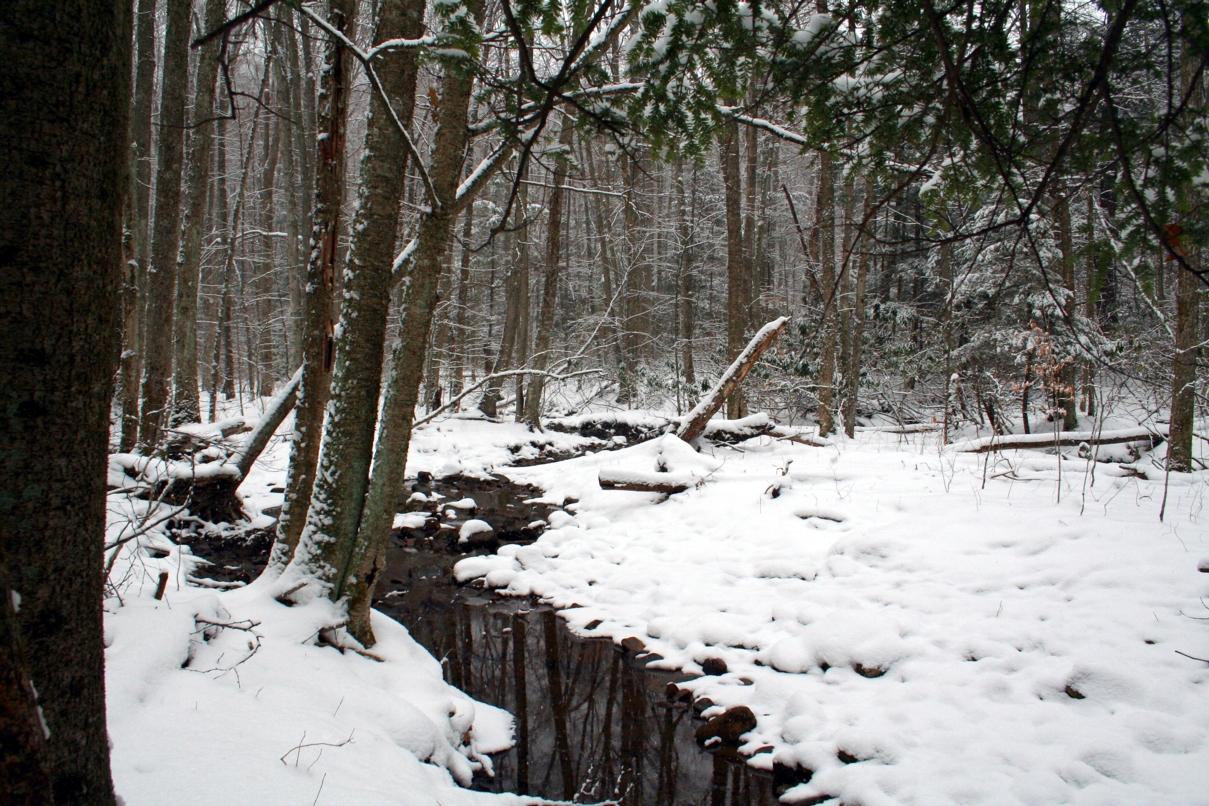 snow creek height