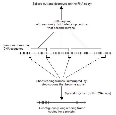 File:Split Gene Theory figure 3.png