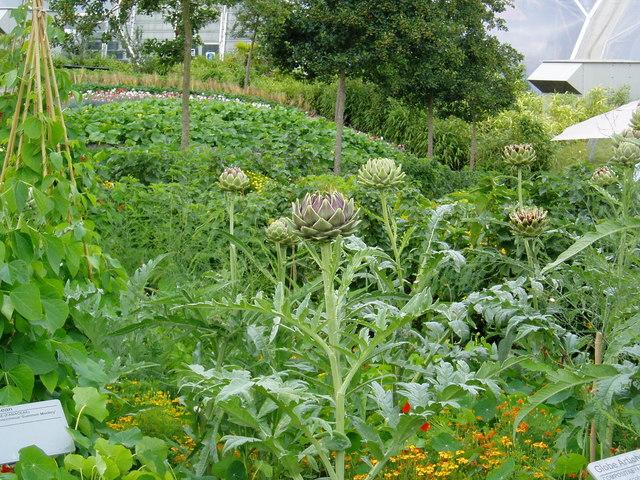 File:The 'vegetable garden' at Eden - geograph.org.uk - 192358.jpg