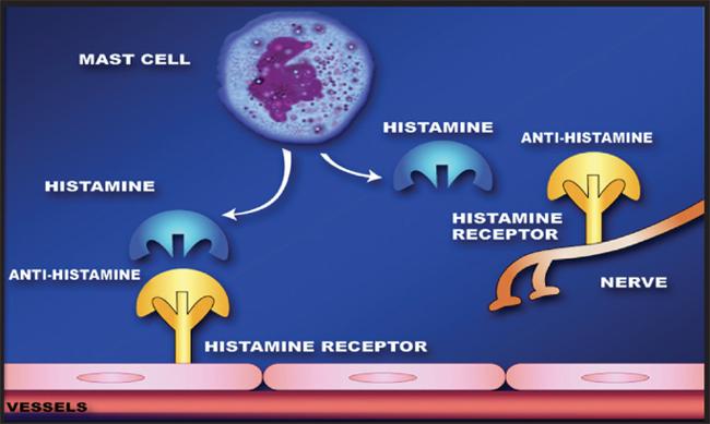 Resultado de imagen de antihistamine