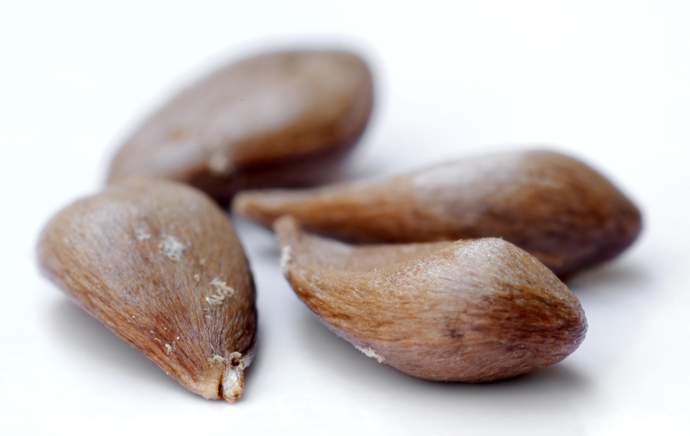 File Apple Seeds