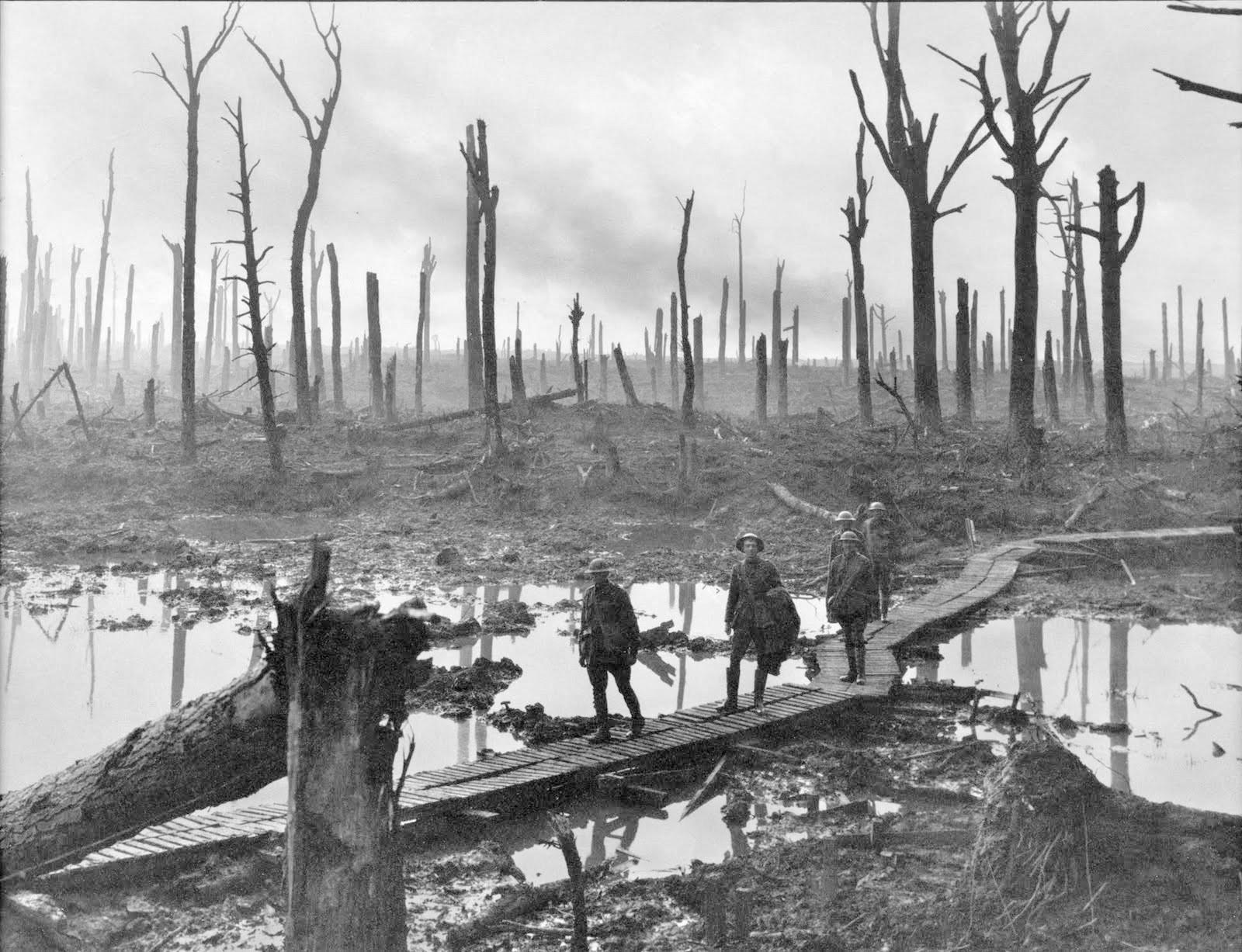 Der Chateauwald bei Ypern besteht nach den intensiven Artilleriebombardements nur noch aus Baumstümpfen (1917)