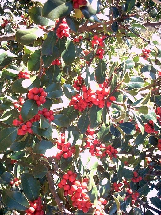 Flora im Wandergebiet Los Acebeas