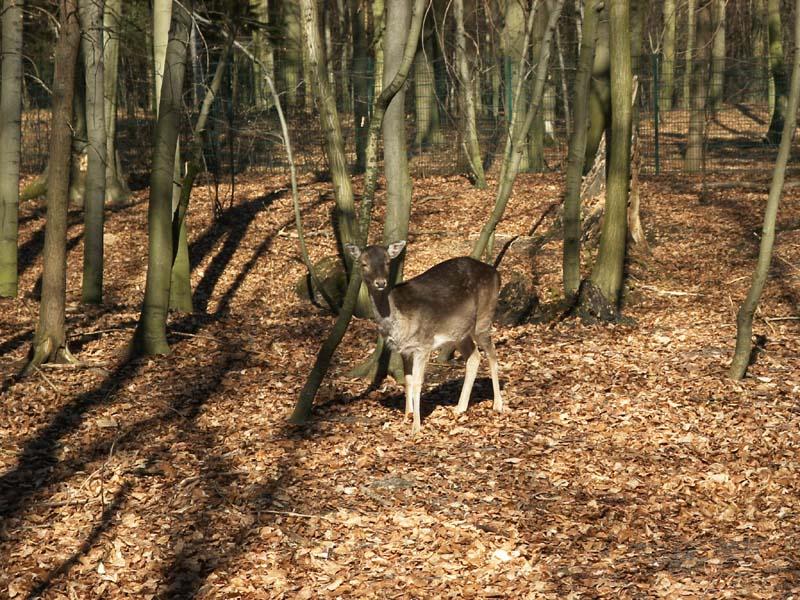 singles in Eberswalde