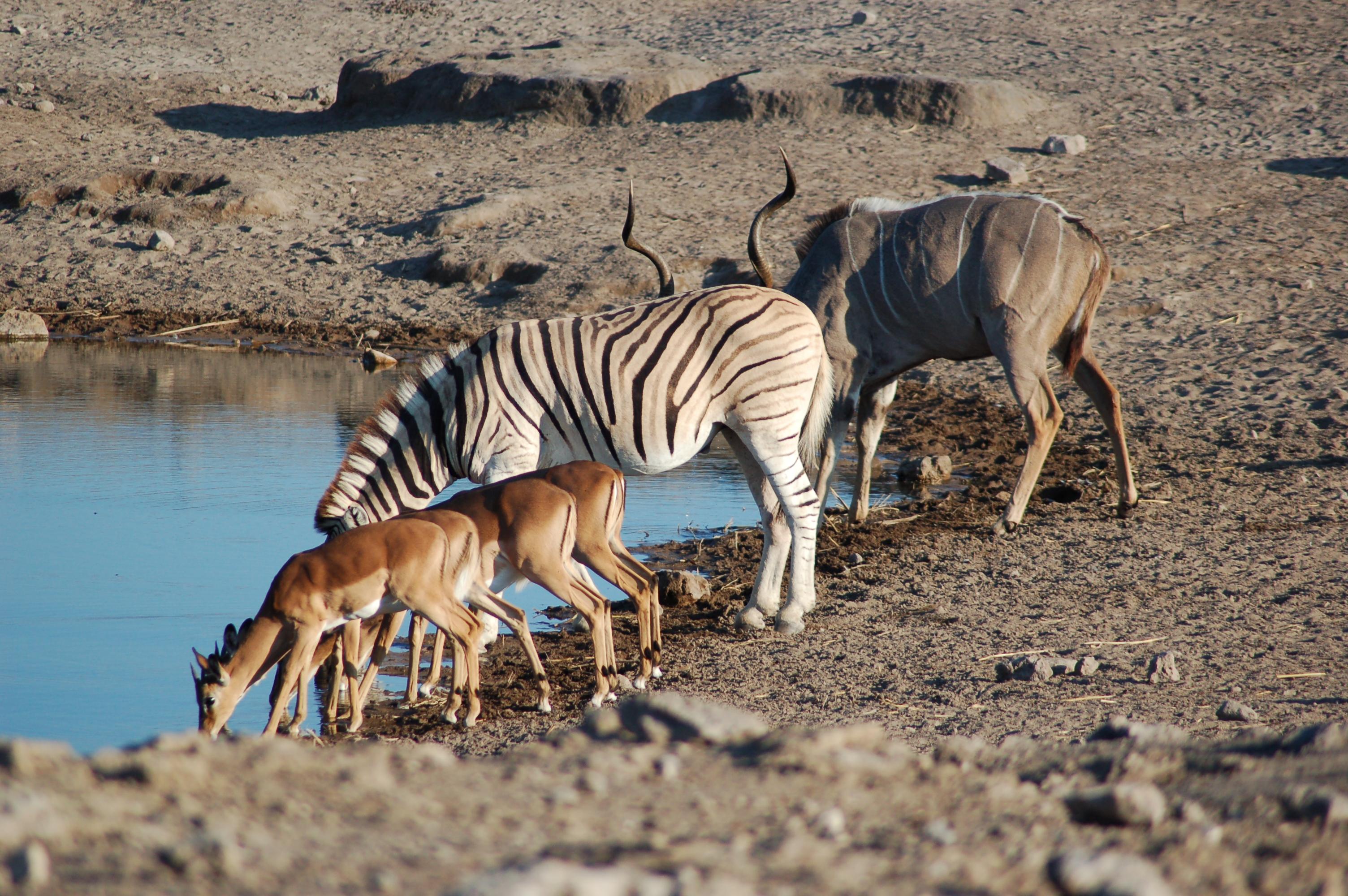 The 6 Best Etosha National Park Hotels - booking.com