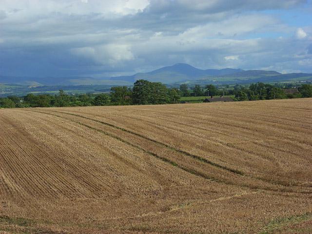 Farmland, Raby - geograph.org.uk - 901015