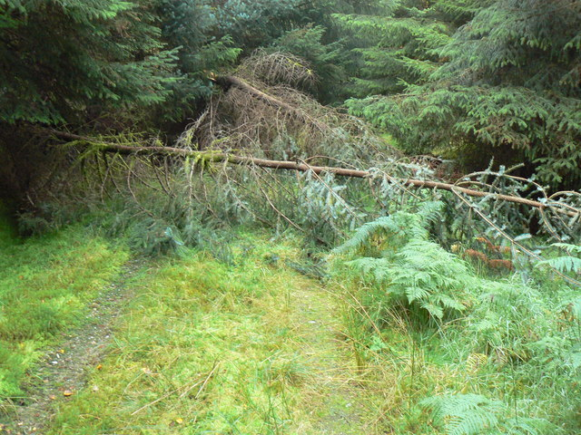 Forest Track above Ardentinny - geograph.org.uk - 581524