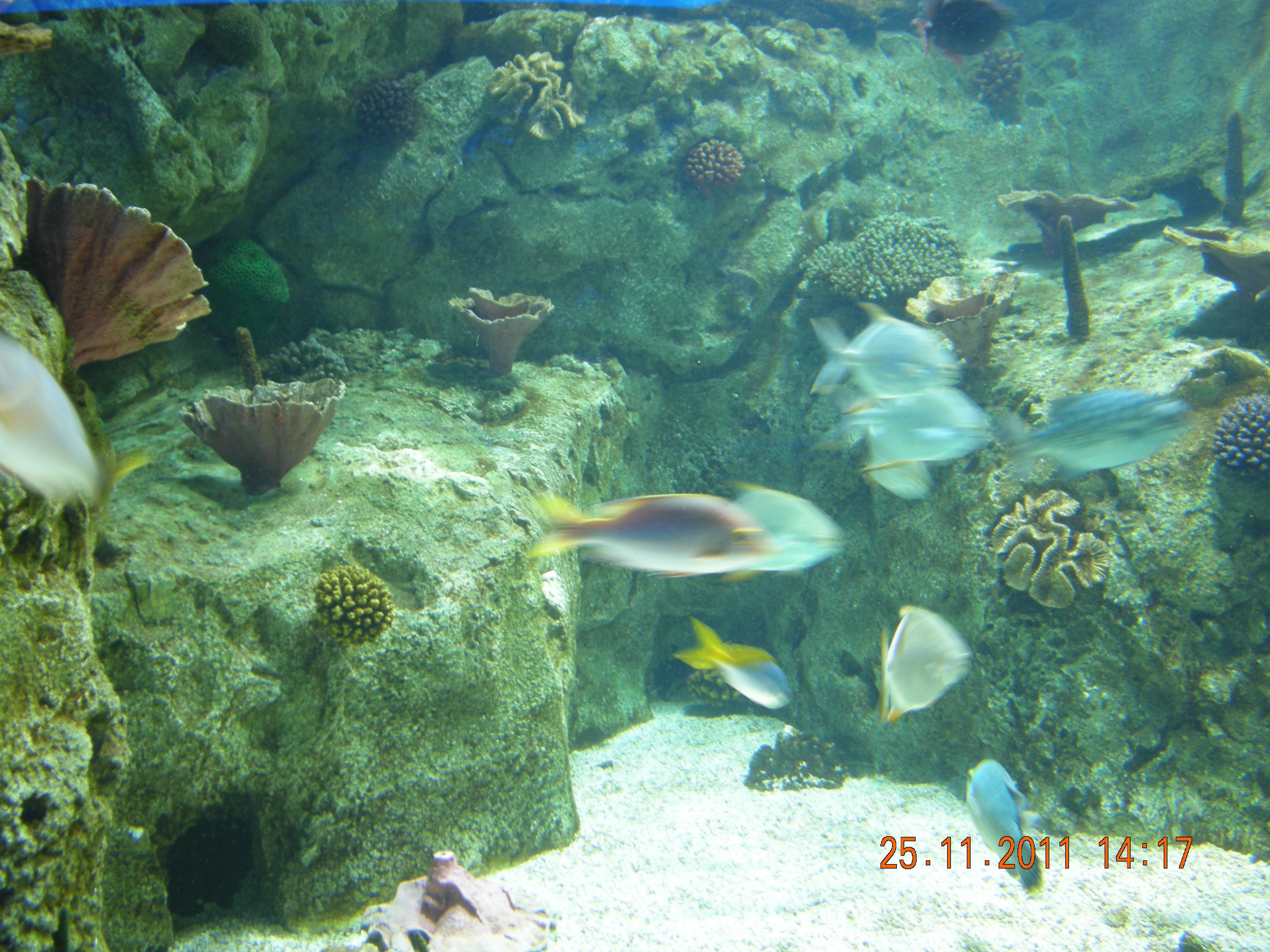 Description Istanbul Aquarium 58.jpg