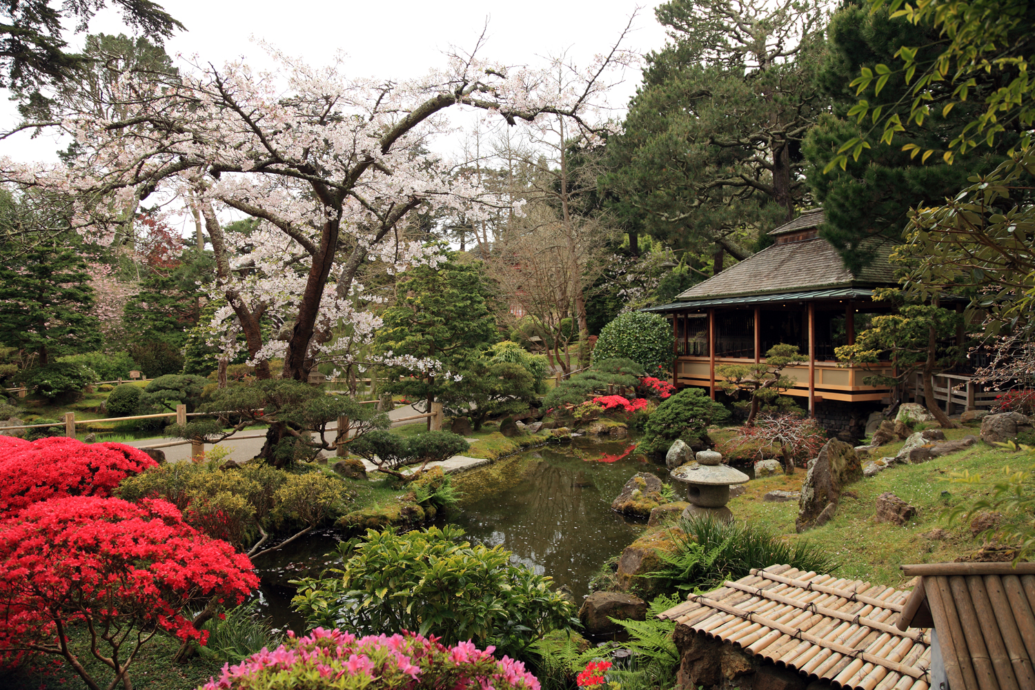 Japanese tea garden co curricular tickets sat sep 24 for Koi pond japanese tea garden san francisco