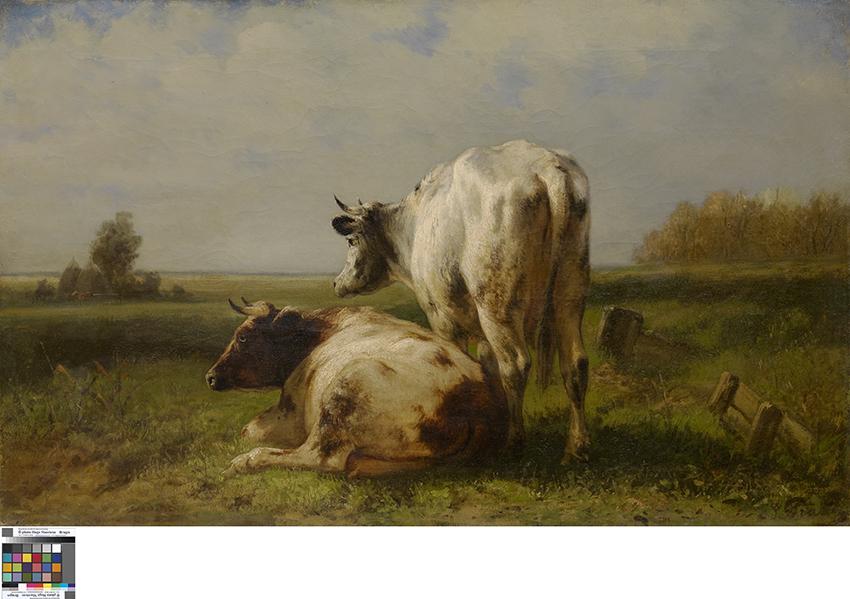 Koeien in de weide