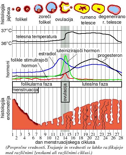 Telesna temperatura 34 5