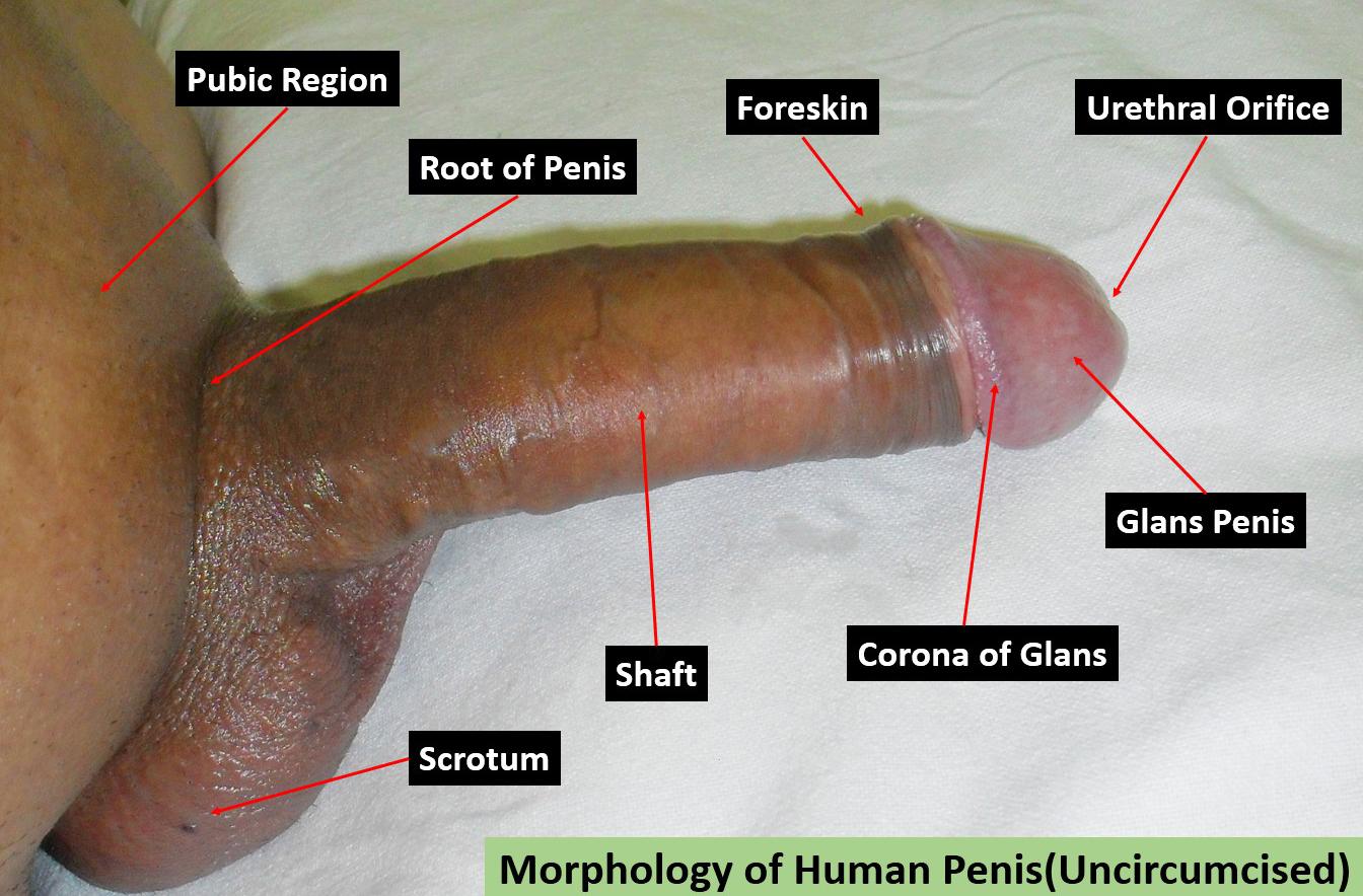 Sex vids xnnx