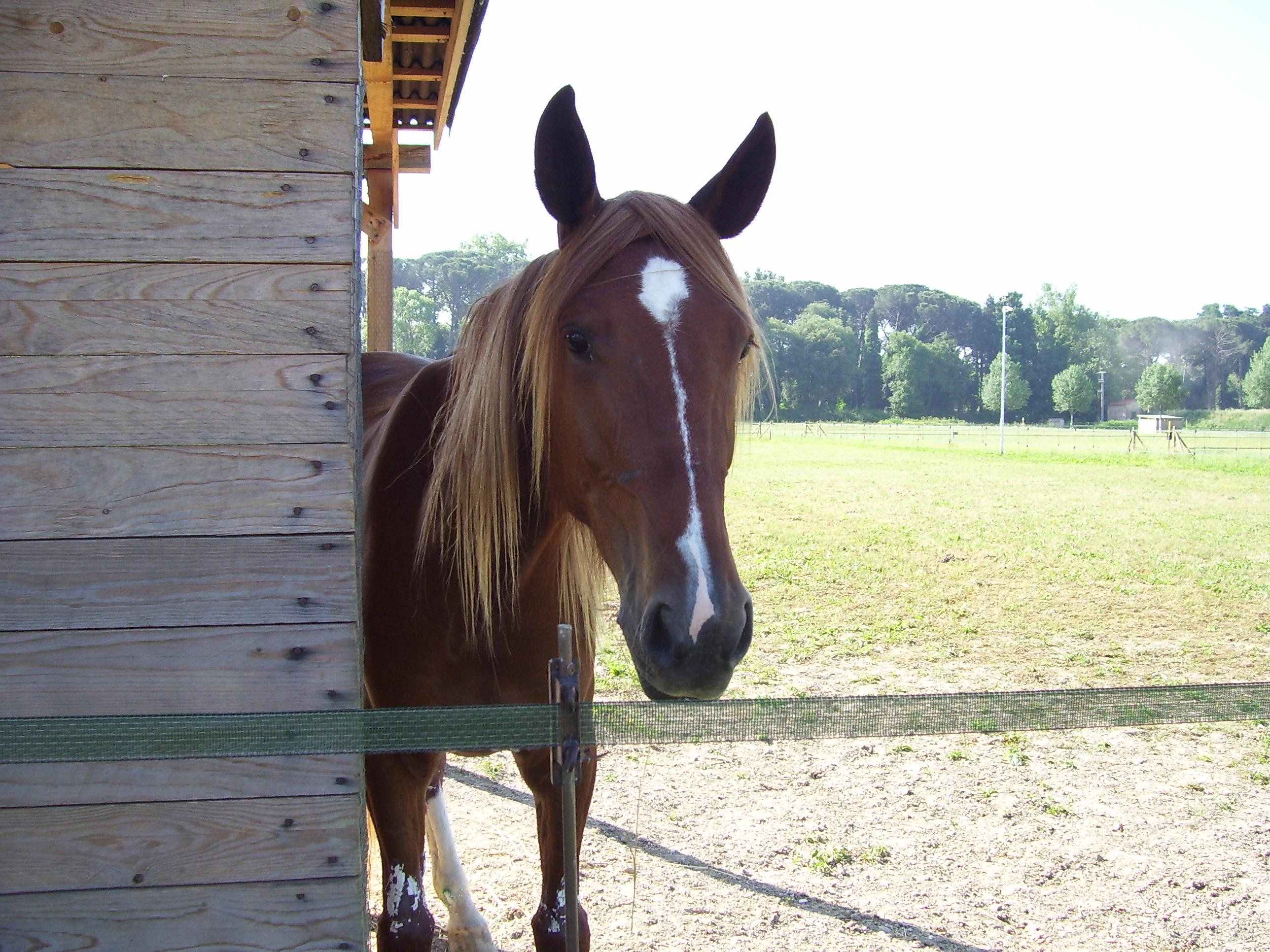 Muso di cavallo (Horse Head) 2.jpg