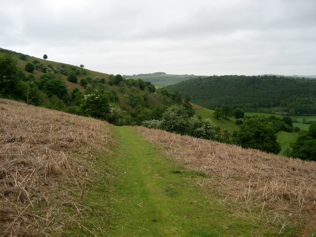 On the flank of Herrock Hill - geograph.org.uk - 450175